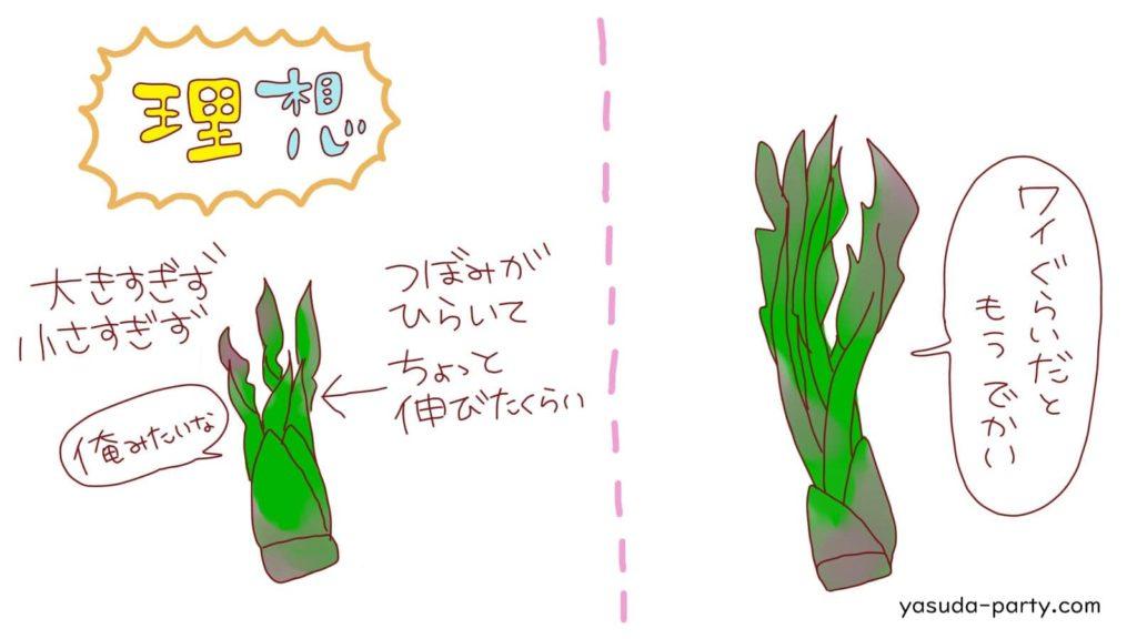 タラの芽の理想と現実
