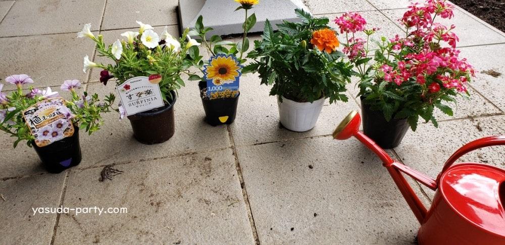 園芸用の花各種