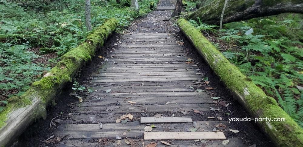 奥入瀬渓流 苔の橋